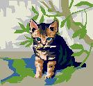 Image pour la petite chatte imprudente