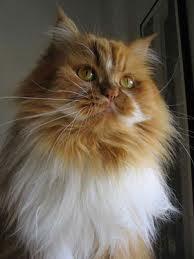 Chat pour qui aime bien chatte y vient
