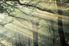 Forêt de Brocéliandre