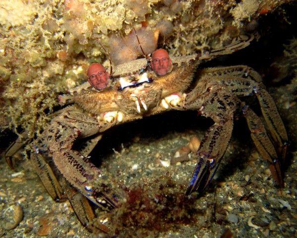 Pierre en crabe